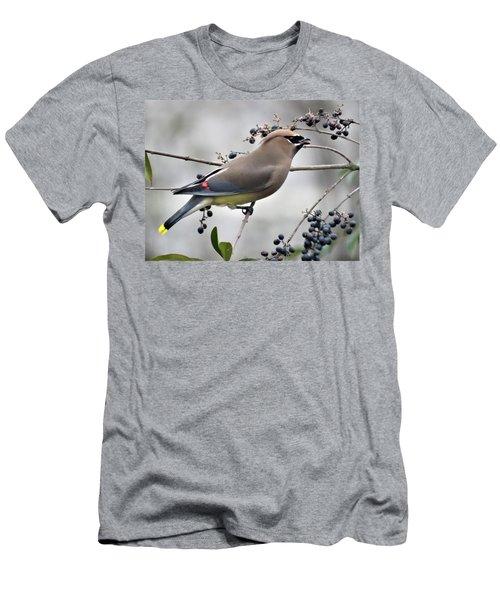 Cedar Waxwing 2 Men's T-Shirt (Slim Fit) by Kathy Long