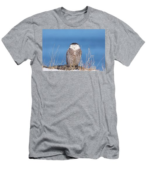 Centered Snowy Owl Men's T-Shirt (Athletic Fit)