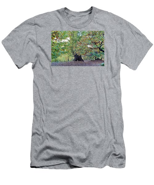 Chestnut Tree In Autumn Men's T-Shirt (Slim Fit) by Goyo Ambrosio