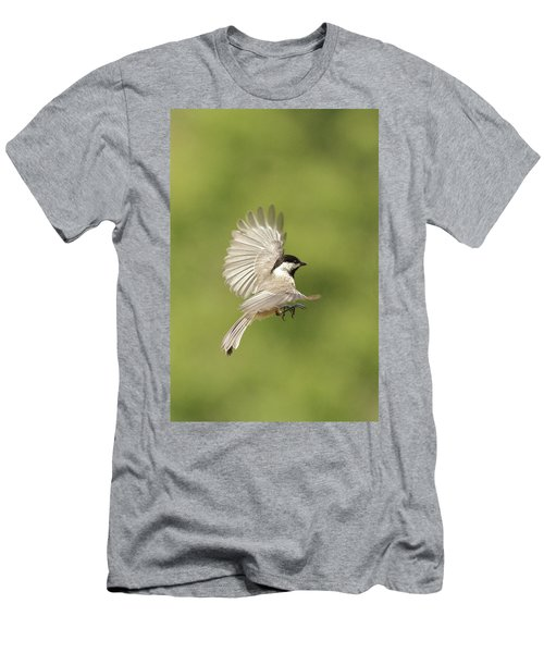 Chickadee In Flight Men's T-Shirt (Slim Fit) by Alan Lenk