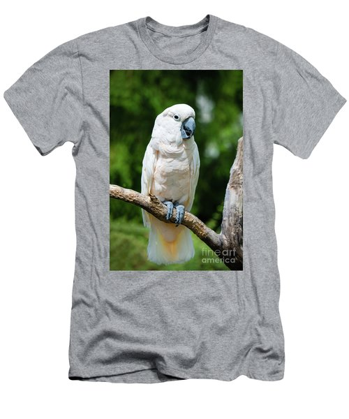 Cockatoo Men's T-Shirt (Athletic Fit)