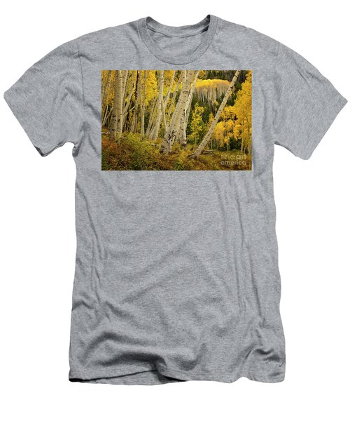 Colorado Fall Aspen Grove Men's T-Shirt (Athletic Fit)