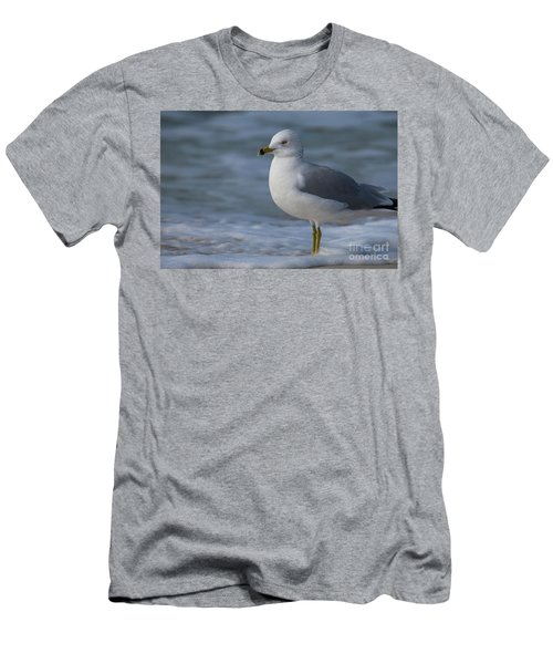 Common Gull Men's T-Shirt (Athletic Fit)