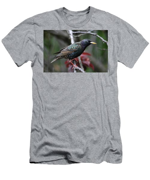 Common Starling Men's T-Shirt (Athletic Fit)