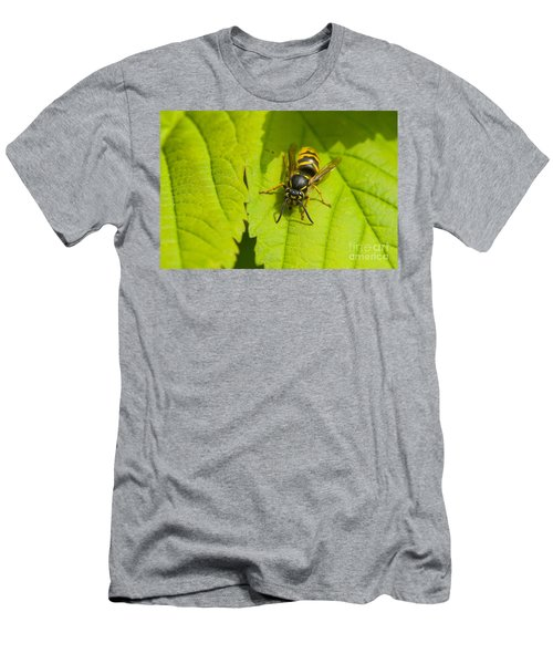 Common Wasp Men's T-Shirt (Athletic Fit)