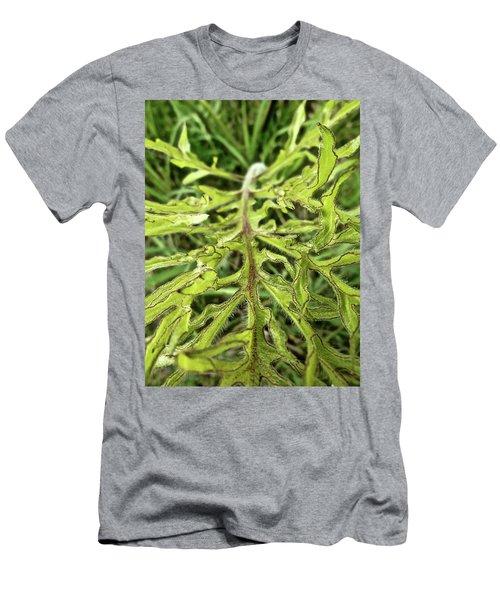 Compass Plant Men's T-Shirt (Slim Fit) by Tim Good