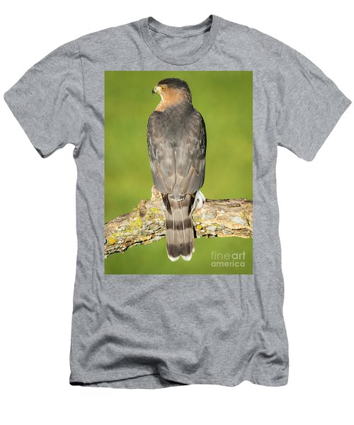Cooper's Hawk In The Backyard Men's T-Shirt (Athletic Fit)