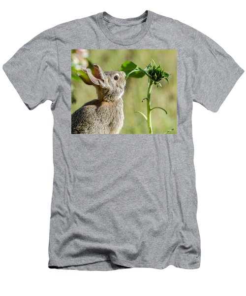 Cottontail Rabbit Eating A Sunflower Leaf Men's T-Shirt (Slim Fit) by John Brink