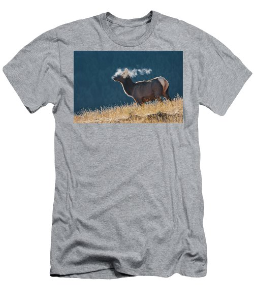 Cow Elk With Steamy Breath Men's T-Shirt (Athletic Fit)
