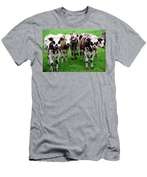 Cow Group Men's T-Shirt (Athletic Fit)