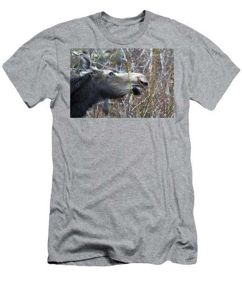 Cow Moose Dining On Willow Men's T-Shirt (Athletic Fit)