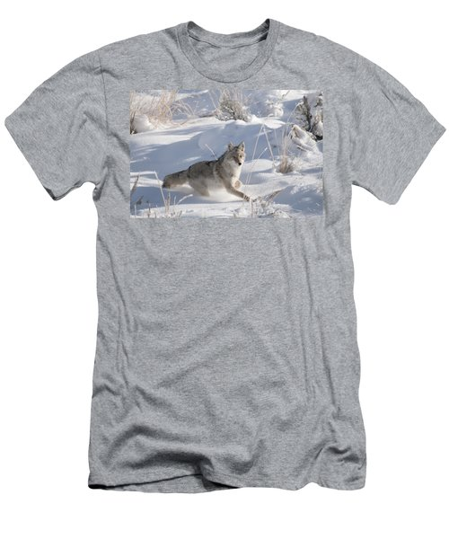 Coyote On The Move Men's T-Shirt (Athletic Fit)