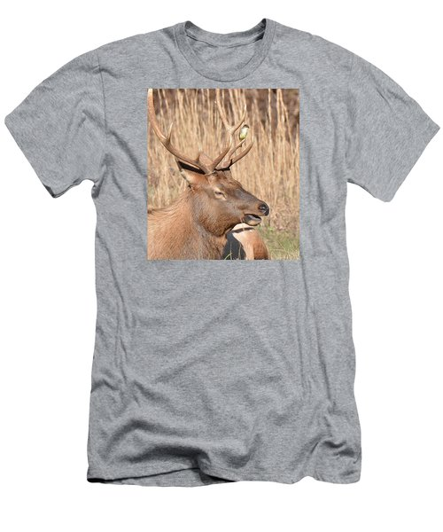 Creatures Great And Small Men's T-Shirt (Athletic Fit)