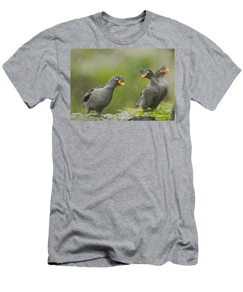 Crested Auklets Men's T-Shirt (Athletic Fit)