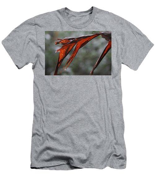 Crimson Leaf In The Amazon Rainforest Men's T-Shirt (Athletic Fit)