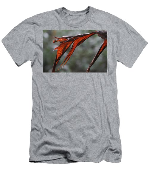 Crimson Leaf In The Amazon Rainforest Men's T-Shirt (Athletic Fit)