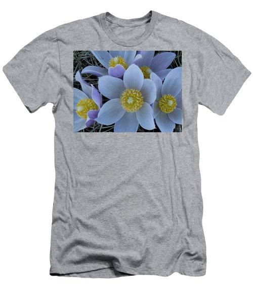 Crocus Blossoms Men's T-Shirt (Athletic Fit)
