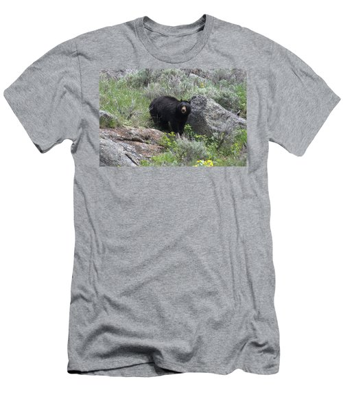 Curious Black Bear Men's T-Shirt (Athletic Fit)