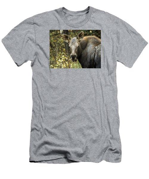 Curious Calf Men's T-Shirt (Athletic Fit)