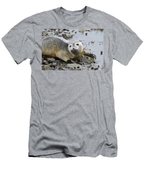 Curious Harbor Seal Pup Men's T-Shirt (Slim Fit) by DejaVu Designs