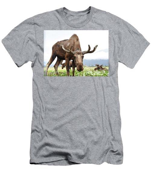 Curious Moose Men's T-Shirt (Athletic Fit)