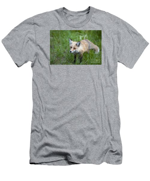 Curious Red Fox Men's T-Shirt (Athletic Fit)