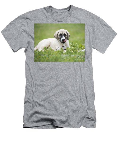 Anatolian Shepherd Puppy Men's T-Shirt (Athletic Fit)
