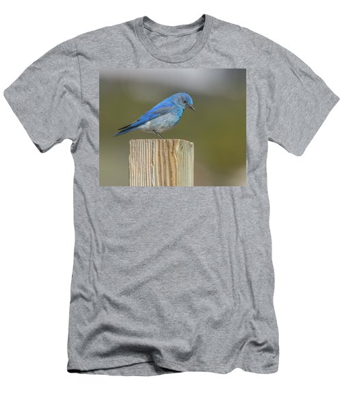Daddy Bluebird Guarding Nest Men's T-Shirt (Athletic Fit)