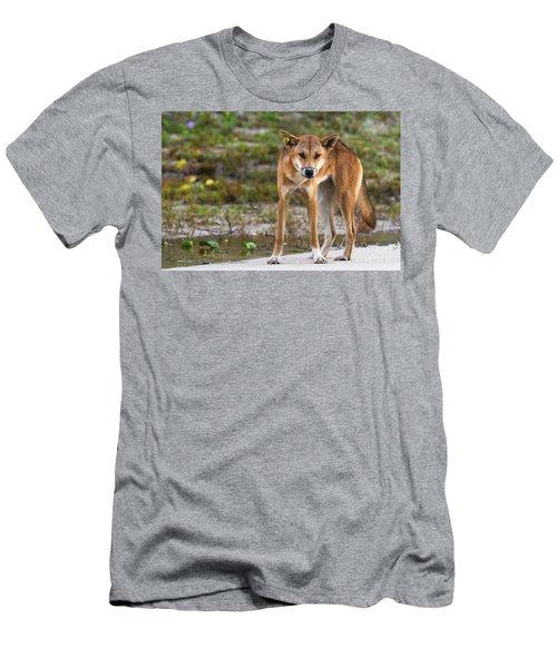 Dingo On 75 Mile Beach, Men's T-Shirt (Athletic Fit)