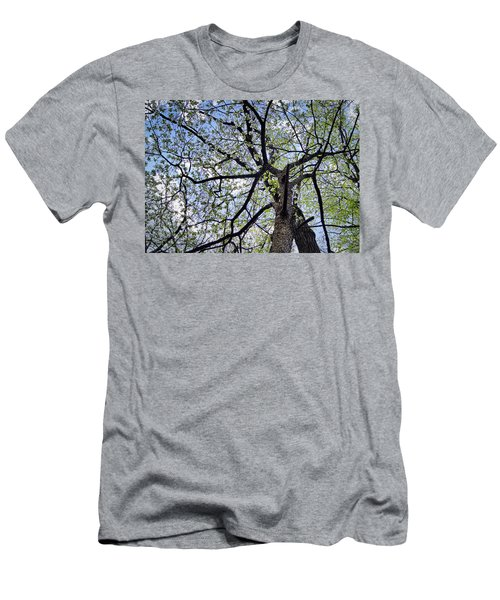 Dogwood Canopy Men's T-Shirt (Athletic Fit)