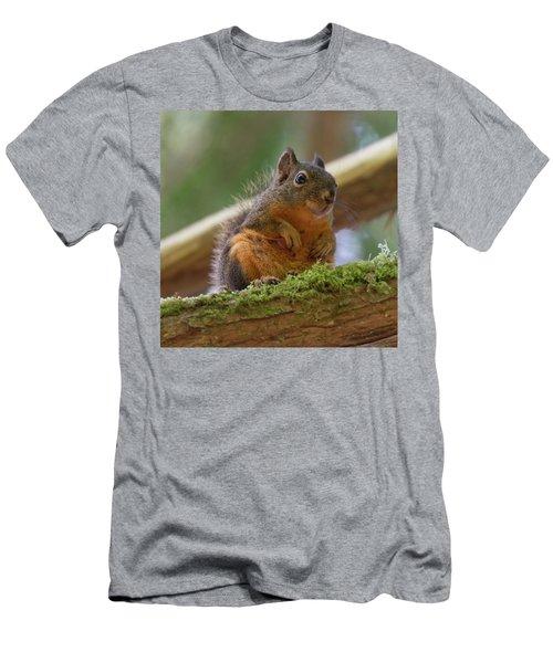 Douglas Squirrel Men's T-Shirt (Athletic Fit)