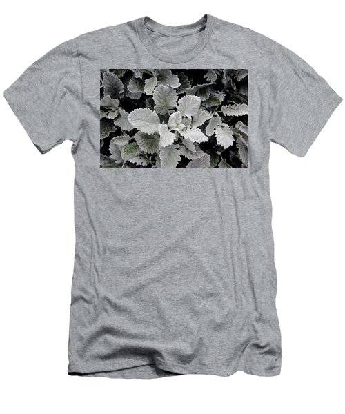 Dusty Miller Men's T-Shirt (Athletic Fit)