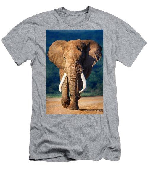 Elephant Approaching Men's T-Shirt (Slim Fit) by Johan Swanepoel