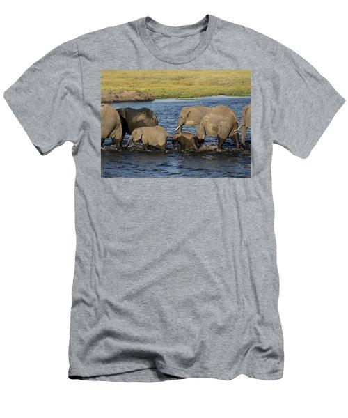Elephant Crossing Men's T-Shirt (Athletic Fit)