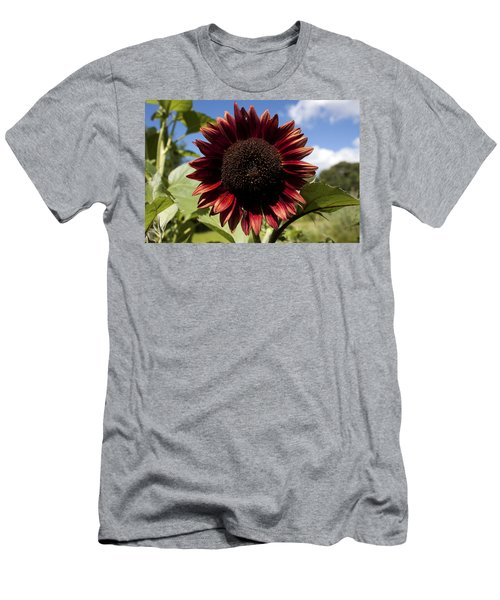 Men's T-Shirt (Slim Fit) featuring the photograph Evening Sun Sunflower #2 by Jeff Severson