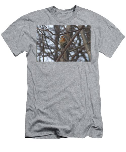 Eye-contact With The Rare - Orange Phase - House Finch Men's T-Shirt (Athletic Fit)