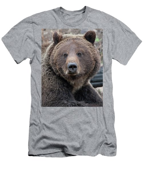 Face Of The Grizzly Men's T-Shirt (Athletic Fit)