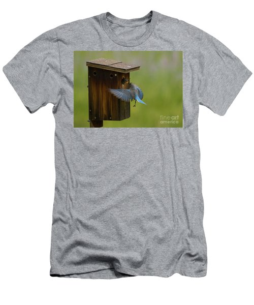 Feeding Time For Bluebirds Men's T-Shirt (Athletic Fit)