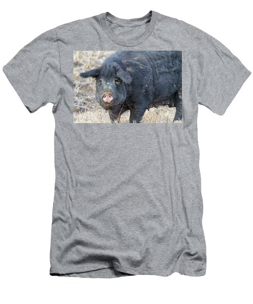 Men's T-Shirt (Slim Fit) featuring the photograph Female Hog by James BO Insogna