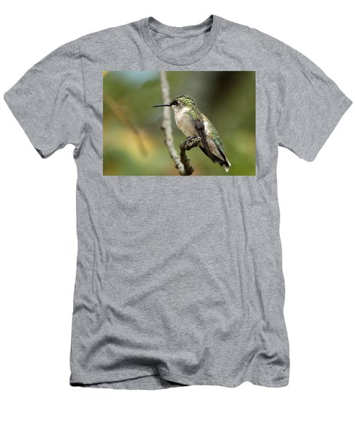 Female Ruby-throated Hummingbird On Branch Men's T-Shirt (Slim Fit) by Sheila Brown