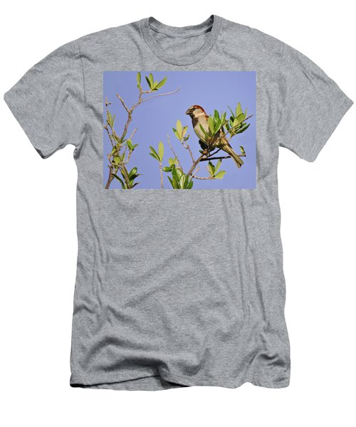 Finch Men's T-Shirt (Athletic Fit)