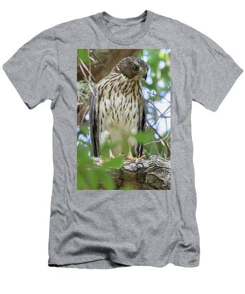 Fledgling Red-shouldered Hawk 2 Men's T-Shirt (Athletic Fit)