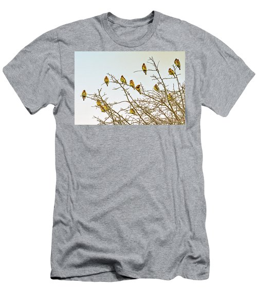 Flock Of Cedar Waxwings  Men's T-Shirt (Slim Fit) by Geraldine Scull