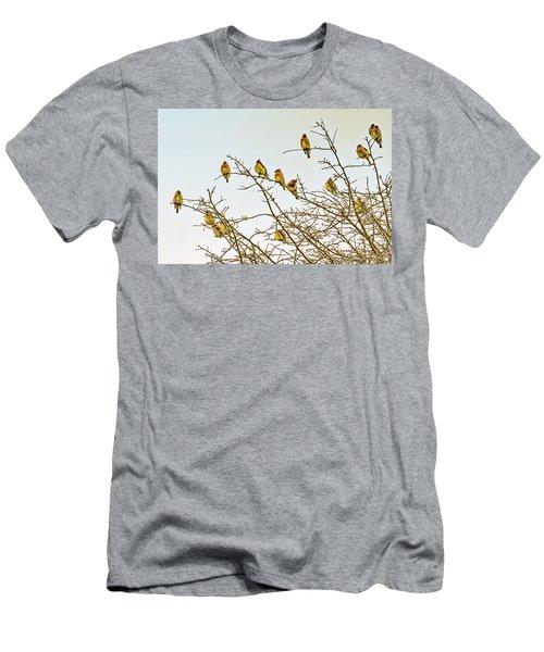 Flock Of Cedar Waxwings  Men's T-Shirt (Athletic Fit)