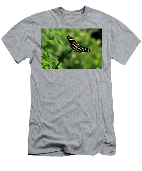 Florida State Butterfly Men's T-Shirt (Slim Fit) by Greg Allore