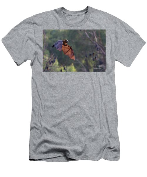 Flying Fox In Mid Air Men's T-Shirt (Slim Fit) by Craig Dingle