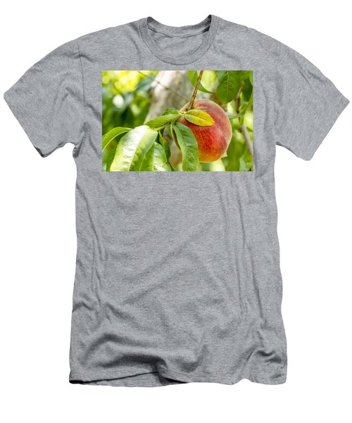 Fresh Peach Hanging In Orchard Men's T-Shirt (Athletic Fit)
