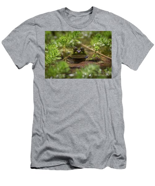 Froggy Men's T-Shirt (Slim Fit) by Douglas Stucky