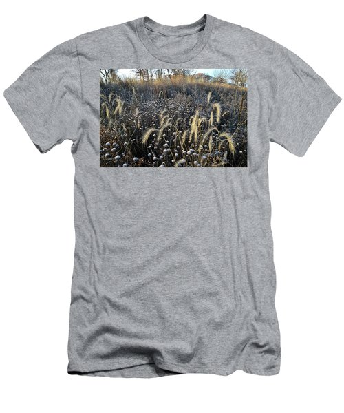 Frosted Foxtail Grasses In Glacial Park Men's T-Shirt (Athletic Fit)
