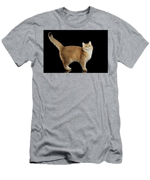 Funny British Cat Golden Color Of Fur Men's T-Shirt (Athletic Fit)